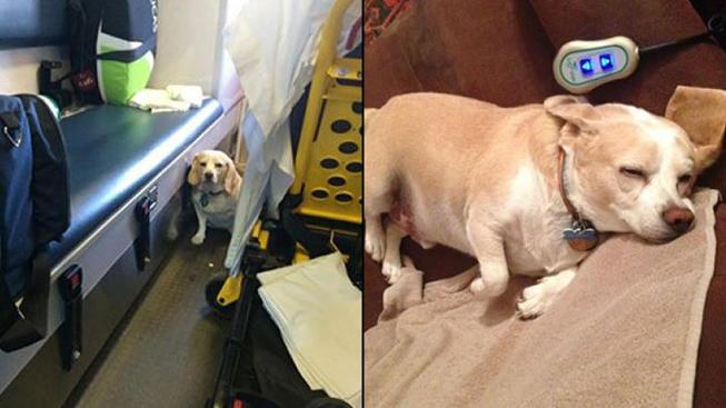 Buddy-Ambulance-Dog