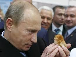 putin baby chicks